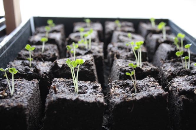 soil block starts