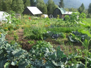 Slocan Valley Farm Opportunity #6: Five Rock Garden